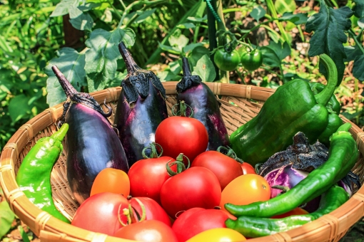 「無料写真有機野菜」の画像検索結果