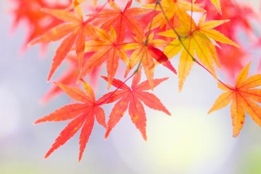 色づく紅葉 20の写真