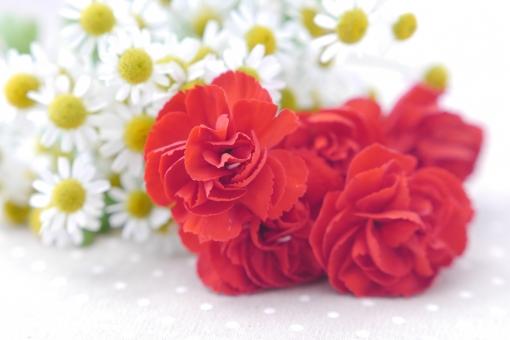 カーネーション 赤 白 メッセージカード ありがとう 5月 素材 美容 結婚 イメージ 紅白 贈り物 感謝 明るい マクロ アップ 薔薇 ばら 黄色 マトリカリア ギフト 背景 壁紙 母の日 父の日 緑 植物 初夏 5月 6月 五月 六月 おめでとう 誕生日 プレゼント メッセージ カード 花束 フラワーアレンジ お祝い 背景素材 花 バラ 華やか 行事 春