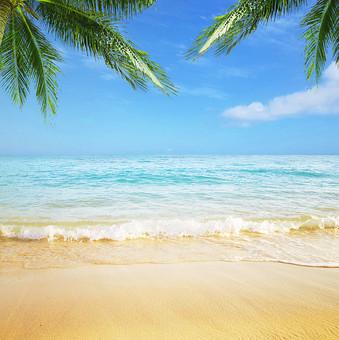 ヤシの木のある浜辺に波が打ち寄せる風景の写真