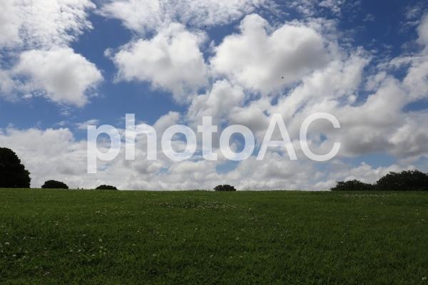 青空と芝生の写真