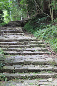 日本 自然 植物 風景 景色 景観 階段 石段 石 石造 草 雑草 土 地面 道 山道 通路 散策 散歩 木 樹木 林 森 森林 葉 葉っぱ 緑 幹 枝 育つ 成長 生える 伸びる 鬱蒼 陽射し 木漏れ日 無人 屋外 山奥