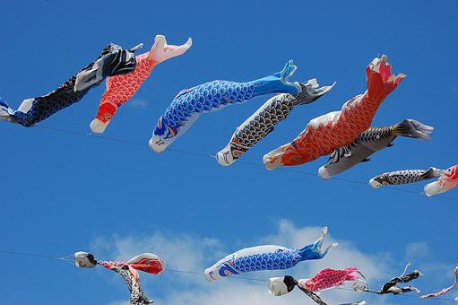 こいのぼり 鯉のぼり 魚 節句 端午の節句 こどもの日 子供の日 行事 年中行事 イベント 文化 伝統 歴史 祝い ハレの日 季節 景色 風景 空 青空 快晴 晴天 晴れ 風 雲 春 カラフル 泳ぐ