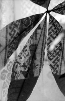 植物 影 パキラ 観葉植物 日差し カーテン レース 縦位置 余白 フィルム モノクロ 白黒 イメージ