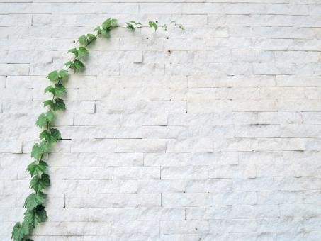 壁 這う 植物 ツタ 背景 背景素材 白 白い壁 石 ブロック 緑 イメージ イメージ素材 さわやか 爽やか シンプル つたう 伸びる 成長 夏 夏イメージ つる ツル 蔓 外壁