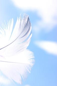 青空と羽3の写真