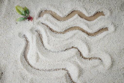 和 和風 禅イメージ 庭 枯山水 砂 砂紋 レーキ 日本 日本庭園 日本文化 庭園 わびさび 和寺 石庭 造園 伝統 白砂 風景 イメージ 京都  縁側 風景 緑 植物 波線 葉
