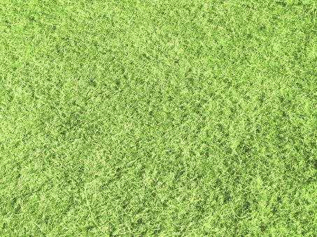 芝生 しばふ シバフ 緑 天然芝 野球場 ゴルフ場 サッカー場 グラウンド スタジアム 地面 フィールド 競馬場 草 葉 エコ 自然 芝生背景 植物 春 夏 バックグルアンド バック テクスチャー テクスチャ 草原 さわやか グリーン エコレジー グリーン