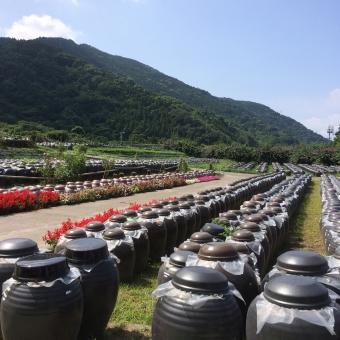 黒酢 壺 景色 風景 福山市 九州 田舎 山 空