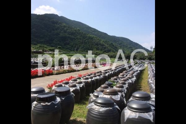 黒酢の壺の写真