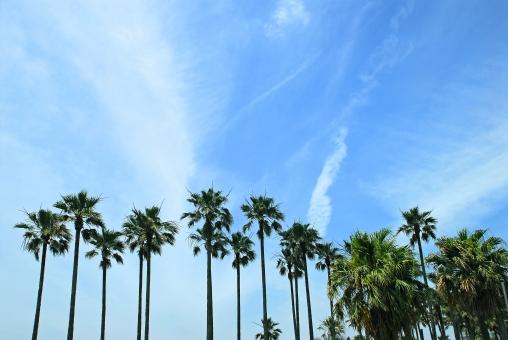 神奈川県 逗子市 マリーナ 南国 ヤシ 空 風景