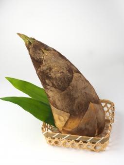 たけのこ 筍 タケノコ 竹の子 竹 野菜 旬 食材 春 夏 4月 5月 四季 季節 シーズン 孟宗竹 モウソウチク 旬の食材 竹の子掘り 和食 日本料理 素材 自然 植物 バンブー レシピ 下ごしらえ 竹林 煮物 アク抜き 竹の皮