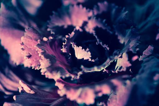 自然 植物 野菜 葉 葉っぱ 食材 食べ物 食べる 生 ベジタブル 縮れる 緑 健康 ヘルシー 成長 育つ 重なる 多い 沢山 密集 集まる 層 光 陽射し ぼやける ピンボケ 無人 アップ 加工 アート