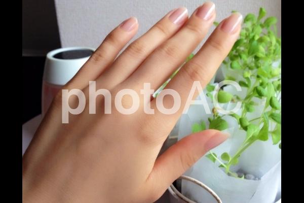 女性の手の写真