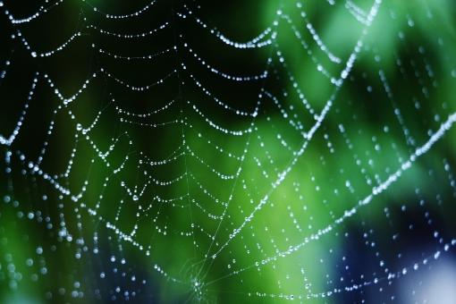 クモの網の写真素材|写真素材なら「写真AC」無料(フリー)ダウンロードOK