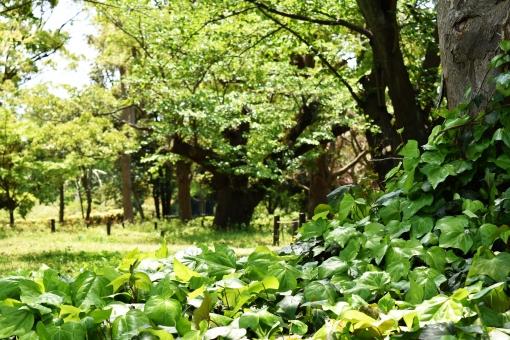 新緑 しんりょく 3月 4月 5月 6月 葉 葉っぱ 緑 黄緑 みどり きみどり 自然 綺麗 爽やか 見上げる 人気 植物 樹木 新鮮 森 林 公園 グリーン 景色 暖かい 季節 若草色 若葉 木洩れ日 木漏れ日 こもれび 明るい 気分 最高 気持ちが良い 空気 クリーン 森林浴 背景 テクスチャ 壁紙 バックグラウンド ヒーリング リラックス 癒し マイナスイオン 初夏 夏 春 リラクゼーション 涼しい セラピー エコ eco アップ 接写 至近距離 ミニチュア風 可愛い かわいい 小さい 雑草 草原 野原