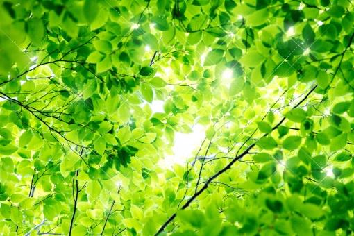 緑のトンネル_1の写真