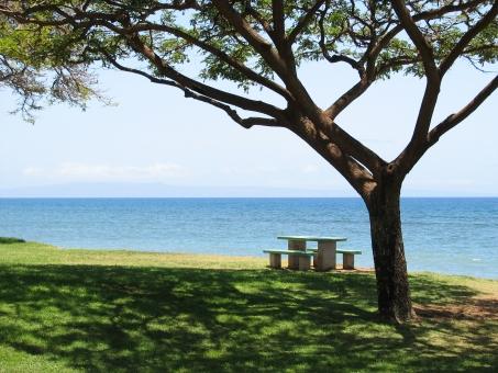 海 水平線 木陰 木 芝生 テーブル ベンチ 椅子 風景 休暇 アウトドア 自然 木漏れ日 休日 リゾート 日陰 グリーン 植物 野外 新緑 五月 初夏 ピクニック 休憩 夏 穏やかな海