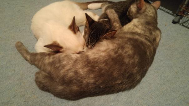 ねこ 猫 ネコ 親子 親猫 子ネコ 子猫 子ねこ 親ねこ おっぱい 吸う 必死 愛情 愛 飲む お乳 母乳 メス ♀
