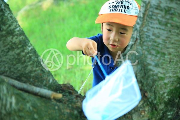 虫採り中の子供9の写真