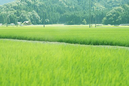 田園 畑 田んぼ のどか 植物 晴れ 自然 明るい 屋外 草 日光 空 収穫 緑 豊 産業 農業  農園 田舎  屋外 晴天 晴天 景色 風景 森