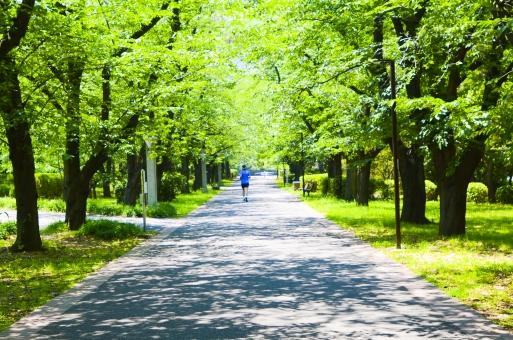 ジョギング 公園 道 一本道 直線 ランナー ランニング ジョガー マラソン 走る 男性 男 緑 グリーン スポーツ 並木 春 夏 初夏 並木道 木 健康 清々しい 自然 ナチュラル 環境 風景 景色 鍛える 道路 さわやか