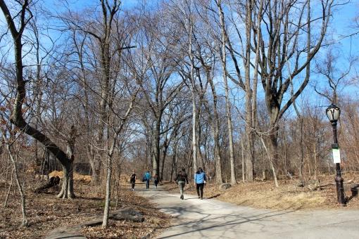 ニューヨーク セントラルパーク 公園 冬 自然 アメリカ 木 植物 散歩