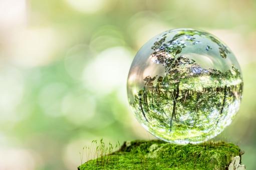 苔とガラスの地球儀の写真
