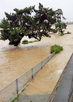 濁流 水 水害 豪雨 雨 大雨 川 河川 天候 天気 悪天候 洪水 激流 災害 土砂 濁った 急流 氾濫 勢い 台風 鉄砲水 集中豪雨 危険 道 溢れる 木 松の木