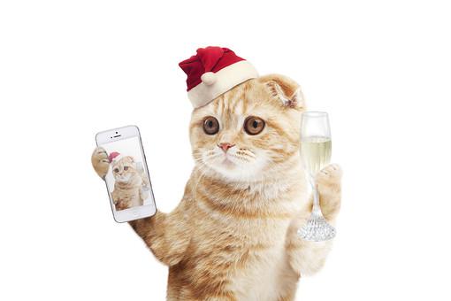 スマホ片手にクリスマスパーティーのネコの写真