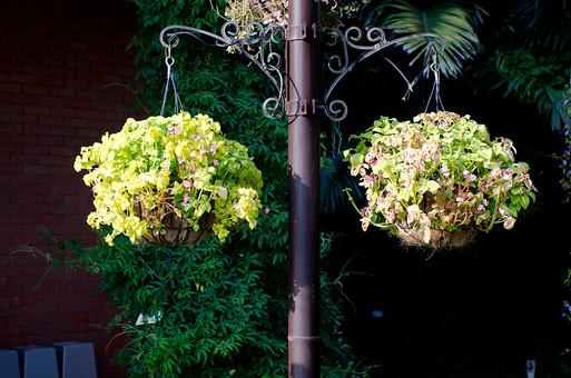 ハンギングプランター プランター  鉢植え 寄せ植え 植物 栽培 花 はな 草花 自然  葉っぱ 葉 園芸 ガーデニング 庭  鉢 植木鉢 空中 吊るす 鉄柱 インテリア お洒落 世話 アレンジメント フック