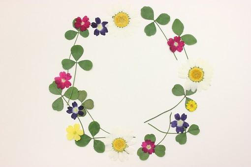 押し花 花 ドライフラワー 小花 植物 白バック 背景 背景素材 美しい かわいい 繊細な  並んだ 黄色 ピンク 赤 緑 白 クローバー 春 紺 複数 華やかな フレーム 枠 囲み