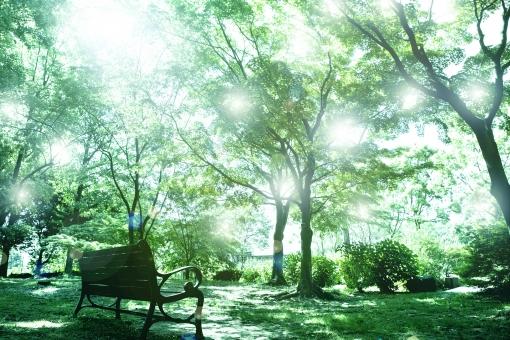 新緑の光の写真