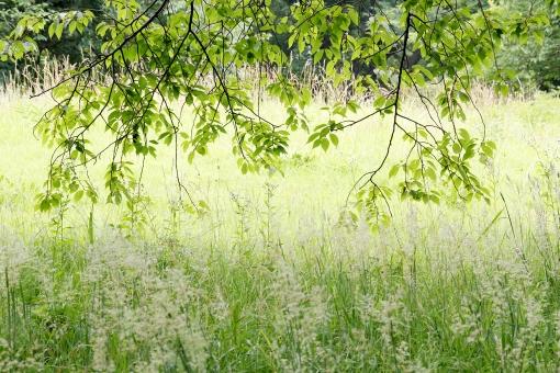 木かげ 葉 枝 樹木 葉っぱ 自然 日陰 日かげ 木漏れ日 木陰 木影 植物 草 雑草 木 緑 緑色 野草 山野草 花 草花 草木 新緑 光 陽光 のどか のどかな 長閑な 静か 静寂 春 夏 森 林 森林 雑木林 風景 環境 エコロジー 原っぱ 公園 野原 丘 イメージ 晴れ 明るい 逆光 影 日影 屋外 無人
