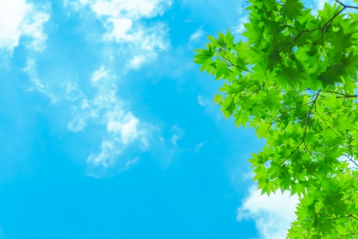 空と新緑の写真