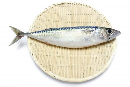さば 鯖 サバ 魚 生魚 鮮魚 魚介類 魚貝類 魚貝料理 魚介料理 海鮮料理 dha 食べ物 生もの 食品 食事 食卓 料理 調理 グルメ 生鮮食品 生鮮食料品 食糧 食料 生サバ 鯖魚 ラウンド鯖 丸さば 八戸前沖さば 生さば 生鯖 健康食材 健康食品 白背景 白バック 白 青魚 光物 epa 栄養 効果 健康 1尾 1匹 1本 真鯖 マサバ まさば ザル 笊 秋 旬 食材