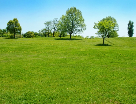 公園の芝生の写真