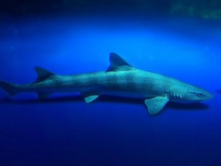 鮫 さめ サメ シャーク 水族館