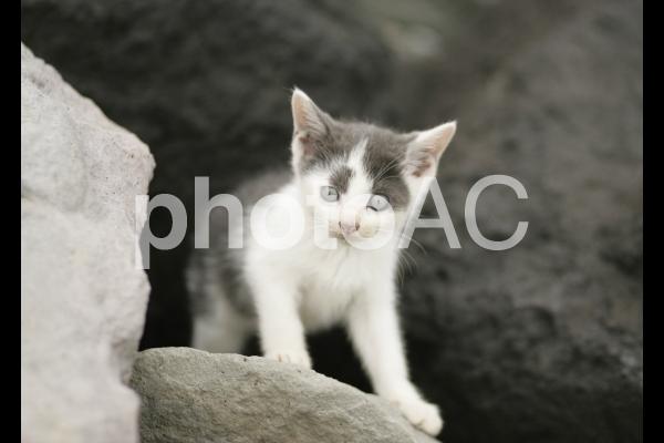 岩猫兄弟3の写真