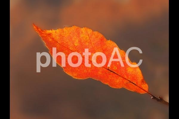 風景 枝に残った紅葉 02の写真