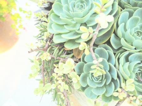 多肉植物 たにく 多肉 植物 園芸 ガーデニング ナチュラル グリーン ヒーリング 緑 生 光 幻想的 セダム スクリーン 背景 素材 ツヤ ライト パステル パステルカラー ハガキ ライム 青 水色 ファンシー 可愛い かわいい