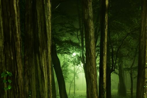 深い森に関する写真写真素材なら写真ac無料フリーダウンロードok