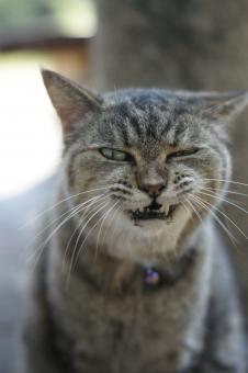 かお いきもの 哺乳類 ねこ のらねこ デビル あくま わる 表情 ねらい こうえん