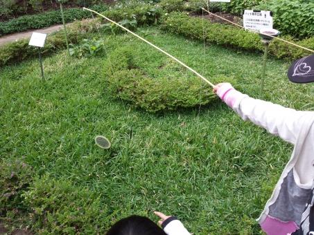 殿様バッタ バッタ 釣り 女の子 子ども 草 手 植物園 休日 女の子の手