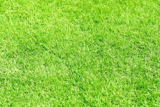 青々とした芝生の写真