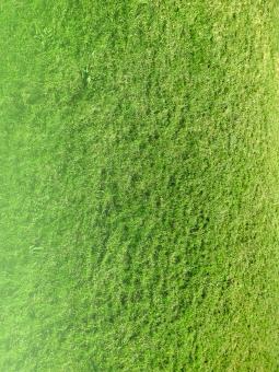 芝生 しばふ シバフ 緑 自然 エコ 芝生背景 しばふ背景 シバフ背景 天然芝 人工芝 公園 サッカー サッカーグラウンド 野球場 植物 庭 ゴルフ場 ラグビー 競馬 ワールドカップ スポーツ 競技 光 背景 風景 チラシ素材 背景素材 web素材 web背景