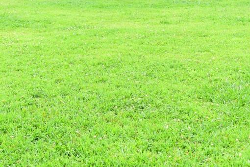 新緑 しんりょく 葉 葉っぱ 緑 黄緑 みどり きみどり 自然 綺麗 爽やか 見上げる 人気 植物 景色 樹木 新鮮 森 林 公園 グリーン 暖かい 季節 若草色 若葉 木洩れ日 木漏れ日 こもれび 明るい 気分 最高 気持ちが良い 空気 クリーン 森林浴 背景 テクスチャ 壁紙 バックグラウンド ヒーリング リラックス 癒し マイナスイオン 初夏 夏 春 リラクゼーション 涼しい セラピー エコ eco アップ 接写 至近距離 緑の絨毯 みどりのじゅうたん 花 白い花 小さい花 白い 小さい 雑草 自然の恵み 恵み