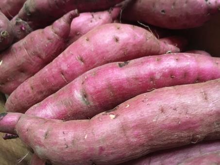 さつまいも サツマイモ 芋 鹿児島 紅はるか 紅 食べ物 食欲 秋 芋掘り 行楽 やすみ 休日 レシピ 献立 スイーツ デザート 離乳食 食物繊維 農業 農家