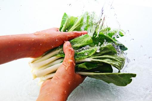 食べ物 食材 野菜 新鮮 フレッシュ   屋内 白バック 白背景 水 水しぶき  水飛沫 瑞々しい 人物 手 部分  両手 アップ 洗う 流水 流れ  持つ 躍動感 瞬間 料理 クッキング 葉物野菜 葉っぱ 緑 小松菜 雪菜