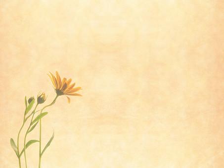 ひまわり ヒマワリ 向日葵 夏 花 植物 自然 草花 素材 空間 ナチュラル テクスチャ 質感 背景 背景素材 バックグラウンド テキストスペース コピースペース ベージュ 枠 フレーム  花びら 1輪 余白 蕾 つぼみ 葉